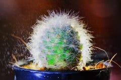 Cactus e goccia di pioggia astratti con luce posteriore Fotografia Stock Libera da Diritti