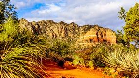Cactus e l'altra vegetazione sulle rocce rosse della foresta nazionale di Coconino, con nei precedenti la roccia variopinta della fotografia stock libera da diritti