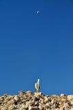 Cactus e luna Immagini Stock Libere da Diritti