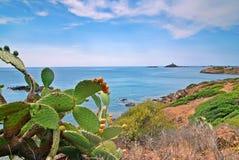 Cactus e mare Immagini Stock Libere da Diritti