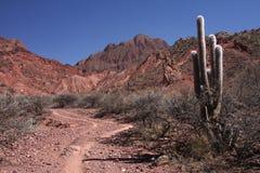 Cactus e percorso in Quebrada Fotografie Stock Libere da Diritti