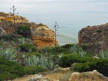 Cactus e piante verdi sulla riva di mare dell'arenaria fotografia stock