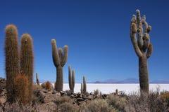 Cactus e Salar di Uynui Fotografia Stock