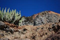 Cactus e scogliera Immagine Stock Libera da Diritti