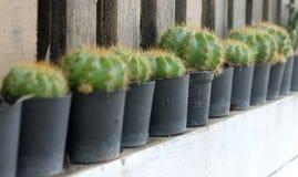 Cactus e succulente Fotografia Stock Libera da Diritti