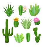 Cactus e succulenti con i fiori Fotografie Stock