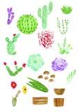 Cactus e succulenti con tiraggio della mano dell'acquerello dei vasi isolati illustrazione vettoriale