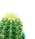 Cactus (Echinocactus grusonii). On a white background stock images