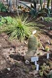 Cactus ed aloe Immagine Stock