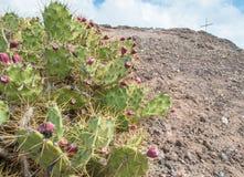 Cactus ed incrocio Fotografia Stock Libera da Diritti