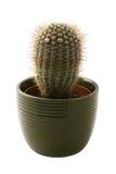 Cactus in een groene pot Stock Afbeeldingen