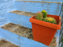 Cactus in een installatiepot Stock Afbeelding