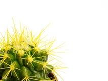 Cactus in een pot op een witte achtergrond Royalty-vrije Stock Foto