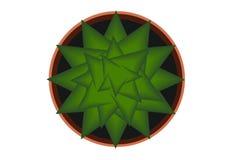 Cactus in een pot, vectorillustratie Hoogste mening Stock Afbeelding