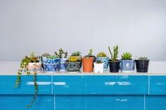 Cactus in een prachtig verfraaide pot stock foto