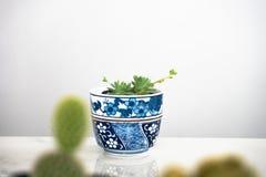 Cactus in een prachtig verfraaide pot op lijst royalty-vrije stock foto's