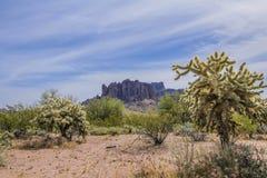 Cactus en Arizona Imagenes de archivo