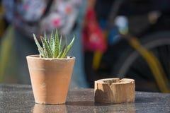 Cactus en Ash Tray Stock Foto