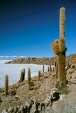 Cactus en aviones del listón Imagen de archivo