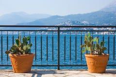 Cactus en balcón Fotografía de archivo libre de regalías