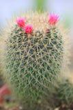 Cactus en bloem Royalty-vrije Stock Fotografie