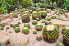 Cactus en botanisch Stock Foto