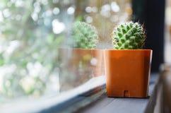 Cactus en café Photo stock