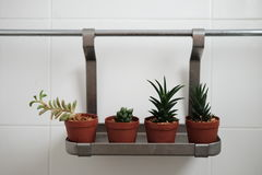Cactus en cuarto de baño Fotografía de archivo