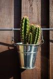 Cactus en cubo del metal Imagenes de archivo