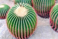 Cactus en desierto Foto de archivo