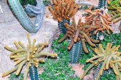 Cactus en desierto Fotos de archivo