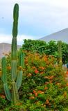 Cactus en el corazón de la ciudad Imagen de archivo libre de regalías
