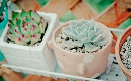 Cactus en el earthware, estilo del color en colores pastel Foto de archivo