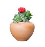 Cactus en el enemigo del pote de arcilla adornado Fotografía de archivo