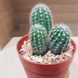 Cactus en el fondo de madera Imagen de archivo