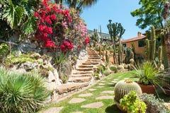 Jardín de las plantas exóticas Pallanca Imágenes de archivo libres de regalías