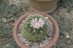 Cactus 8 en el parque botánico de Xiamen imagenes de archivo