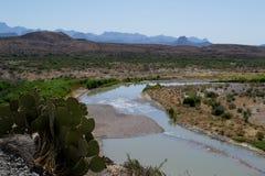 Cactus en el parque nacional de la curva grande Foto de archivo libre de regalías