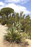 Cactus en el parque San Diego California del balboa. Imagen de archivo libre de regalías
