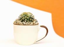 Cactus en el pote Fotos de archivo libres de regalías