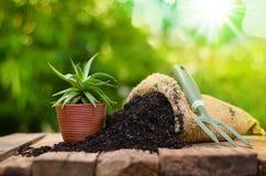 Cactus en el pote de la planta con el bolso del fertilizante sobre fondo verde Foto de archivo libre de regalías