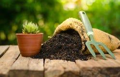 Cactus en el pote de la planta con el bolso del fertilizante sobre fondo verde Imagen de archivo libre de regalías