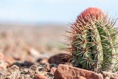 Cactus en el viento Foto de archivo
