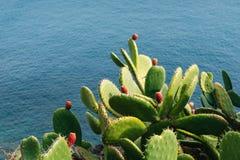 Cactus en fruit tegen blauw water Royalty-vrije Stock Afbeelding