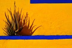 Cactus en gele muur Stock Fotografie