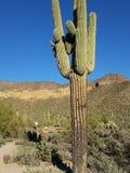 Cactus en hiver Images libres de droits