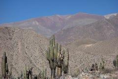 Cactus en kleurrijke berg - Pucara DE jujuy tilcara -, Argentinië royalty-vrije stock afbeelding