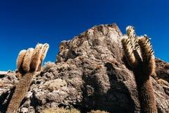 Cactus en la isla de Incahuasi, sal Salar de Uyuni plano fotos de archivo libres de regalías