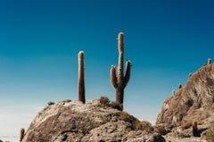 Cactus en la isla de Incahuasi, sal Salar de Uyuni plano fotografía de archivo libre de regalías
