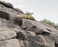 Cactus en la roca Fotografía de archivo